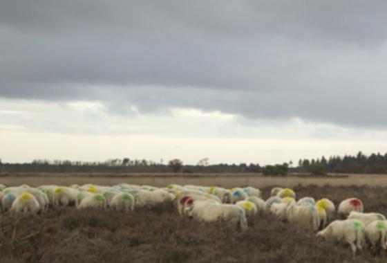 Documentaire Economische Dragers bij Landschapstriënnale'21